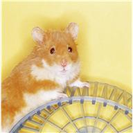 exercise - hamster on wheel